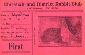 rabbit-club